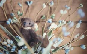 Picture leaves, flowers, childhood, background, mood, stems, toy, Board, bouquet, bear, blue, bear, wooden, bear, plush, …