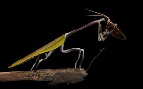 Picture macro, mantis, black background
