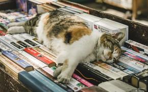 Picture cat, books, sleeping, Juliana Mizinova
