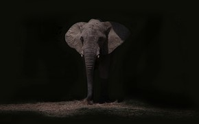 Picture night, nature, elephant