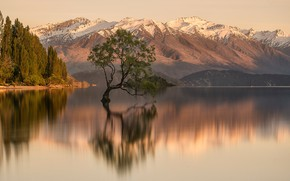Picture mountains, lake, reflection, tree, rocks, shore, the slopes, tops, New Zealand, tree, pond, snow
