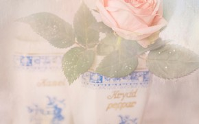 Picture leaves, rose, pot