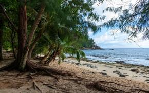 Picture sand, sea, beach, the sky, clouds, trees, tropics, stones, palm trees, coast, horizon, Seychelles, Police ...