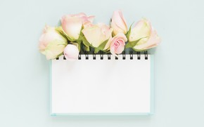 Picture roses, Notepad, buds