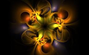 Picture flower, background, pattern, fractal, symmetry