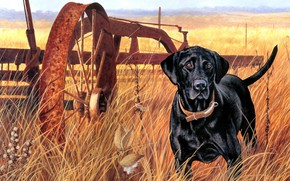 Picture field, autumn, grass, look, nature, figure, dog, picture, art, black, painting, dog, hunting, harrow, Stephen …