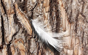 Picture nature, feather, Log