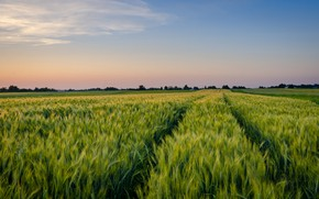 Picture field, the sky, clouds, rye, horizon, track, track, ears, cereals, path, rye field