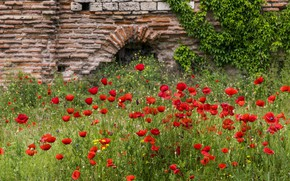 Picture flowers, wall, glade, Maki, arch, red, ruins, bricks, masonry