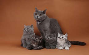 Picture cat, cats, family, kittens, kids, mom, British