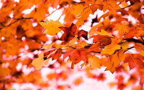 Picture autumn, leaves, branches, nature, background, tree, foliage, bright, yellow, orange, bokeh, autumn leaves