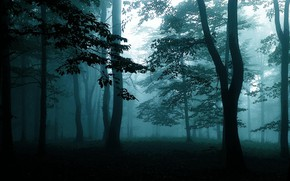 Picture forest, trees, nature, fog, dark