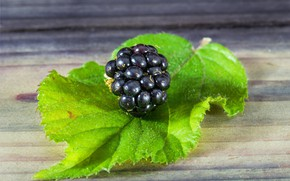 Picture macro, sheet, berry, BlackBerry