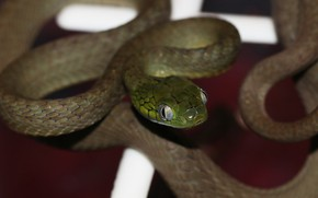 Picture macro, green, the dark background, snake