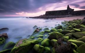 Picture sea, the sky, clouds, algae, sunset, fog, stones, rocks, shore, moss, the evening, green, pierce, …