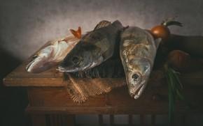 Picture fish, bow, Sudak, perches