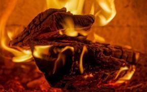 Picture heat, fire, wood, plasma