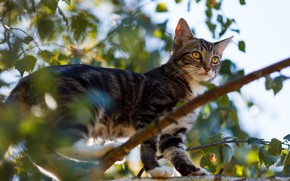 Picture cat, cat, kitty, tree, foliage, branch, kitty, bokeh