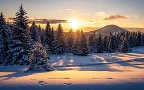 Picture winter, forest, snow, sunset, mountain, Austria, ate, the snow, Austria, Styria, Styria