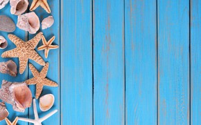 Picture beach, background, Board, star, shell, summer, beach, wood, marine, starfish, seashells