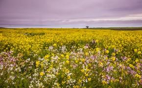 Picture field, summer, the sky, clouds, flowers, yellow, meadow, rape, rapeseed field