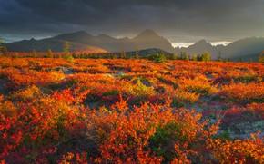 Picture autumn, landscape, mountains, nature, fog, vegetation, plateau, shrubs, Vladimir Ryabkov, Kolyma