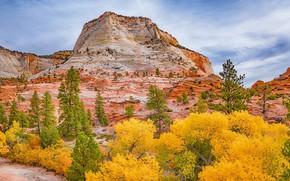 Picture autumn, rock, Utah, USA, Zion National Park