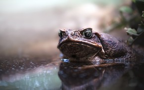 Picture nature, frog, dampness
