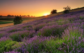 Picture summer, the sun, rays, landscape, nature, sunrise, dawn, morning, Poland, meadows, lavender