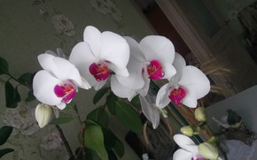 Picture White, Orchid, On color