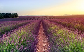Picture field, summer, the sky, light, sunset, flowers, nature, stones, dawn, hills, France, dal, track, path, …