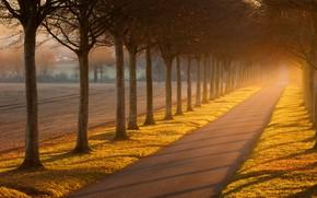 Wallpaper road, field, autumn, light, trees, fog, trunks, alley, the ranks