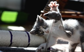 Picture light, pose, kitty, toy, the game, mouse, mouse, kitty