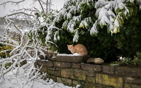 Picture winter, cat, cat, look, leaves, snow, branches, foliage, garden, red, green, bricks, snowfall, snowy