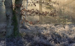 Picture frost, forest, nature