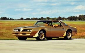 Picture Pontiac, Firebird, Special Edition, Trans Am, Gold