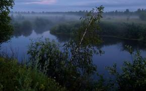 Picture Fog, Trees, Rzeka, Przyroda, Morozov Yuri