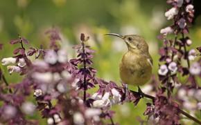 Picture flowers, branch, bird, baby
