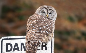 Picture look, nature, letters, background, the inscription, owl, bird, plate, tail, owl, motley