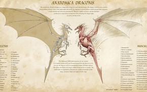 Picture fantasy, Dragon, muscles, artwork, infographic, creature, skeleton, anatomy, info, anatomica draconis