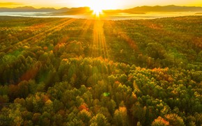 Picture autumn, forest, sunrise, dawn, morning, sunlight
