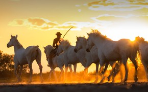 Picture sunset, France, horse, cowboy, the herd, The Camargue