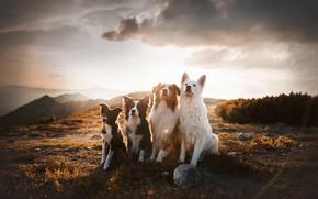 Picture dogs, mountains, Quartet