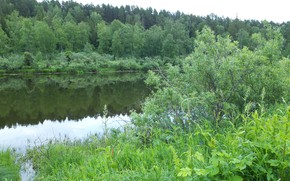 Picture Nature, Lake, Forest, Beauty, forest, Nature, water, beautiful, Siberia