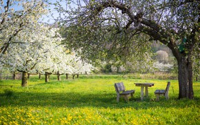 Picture greens, trees, landscape, flowers, nature, table, tree, mood, glade, beauty, spring, garden, meadow, dandelions, benches, …