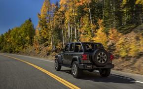 Picture trees, roadside, rear view, 2018, Jeep, dark gray, Wrangler Sahara