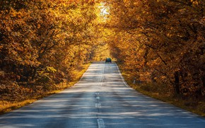 Picture road, machine, autumn, forest, leaves, light, trees, nature, Park, the way, branch, yellow, highway, shadows, …
