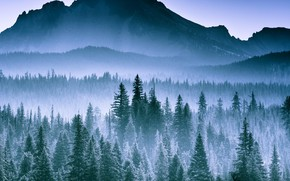 Picture Mountain, Space, Spruce forest