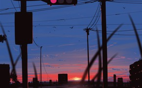 Picture sunset, birds, the city