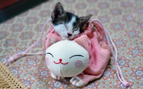 Picture cat, kitty, pink, sleep, legs, baby, muzzle, sleeping, handbag, kitty, bag, kitty, spotted, pouch, he ...